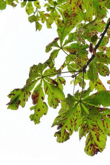 Autumn in Bedfords Park