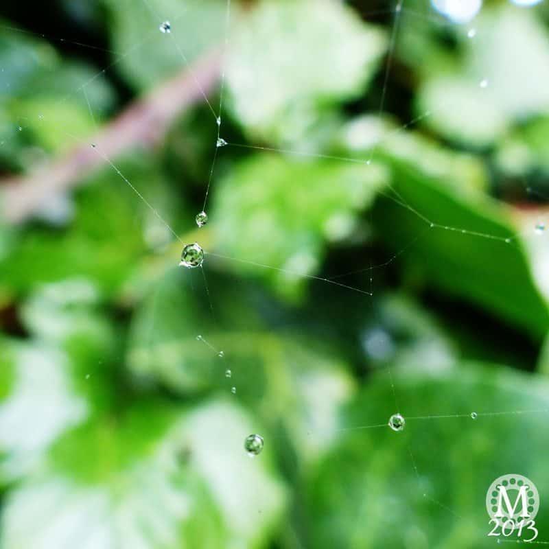 Raindrops on Spiderweb