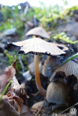 mushrooms-fungi-toadstools (5)
