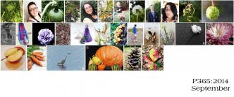 P365-2014_september-roundup