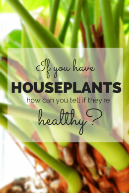 If you have houseplants how can you tell if they're healthy