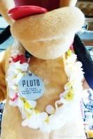 Pluto at'Ohana Character Breakfast