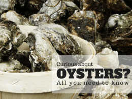 Curious About Oysters - All You Need To Know