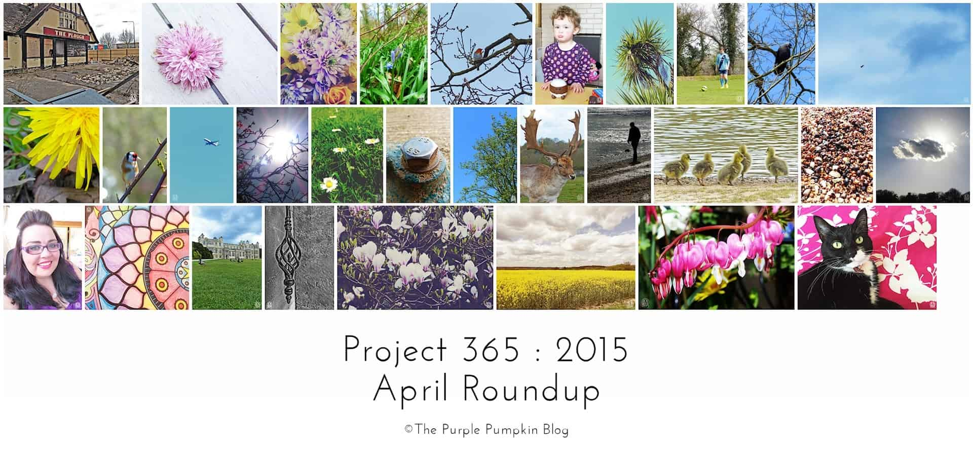 April Roundup Project 365 2015