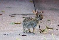 Wildlife at Disney Hollywood Studios