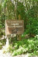 Kilimanjaro Safaris at Animal Kingdom