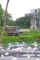 Greater Flamnigo - Kilimanjaro Safaris at Animal Kingdom