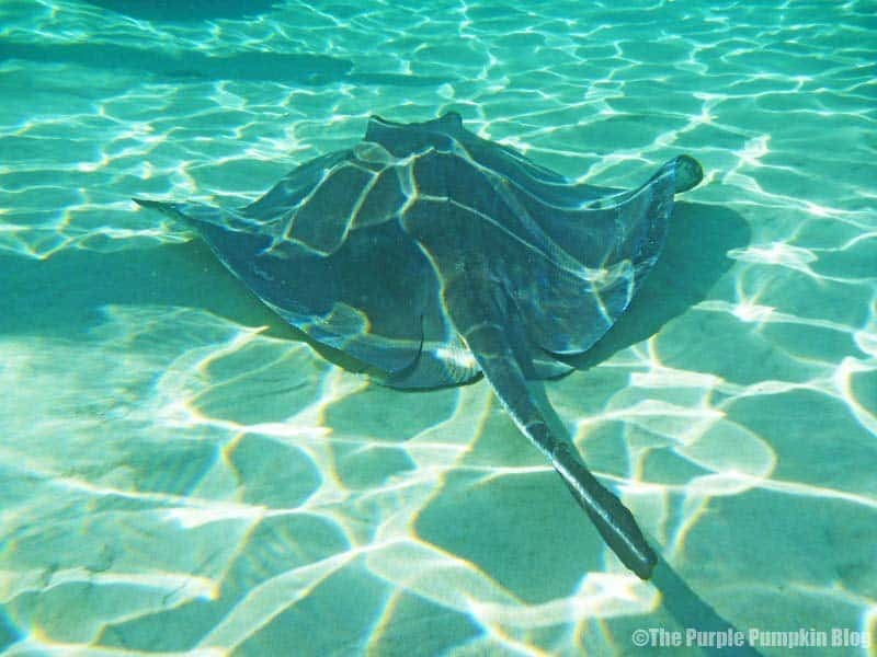 Swimming with Rays #LoveAntiguaBarbuda