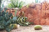 Cacti at Disney Magic Kingdom
