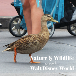 Nature and Wildlife Around Walt Disney World