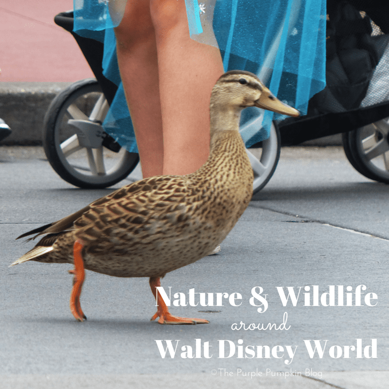 Nature and Wildlife Around Walt Disney World - it's not just theme parks and Mickey Mouse!