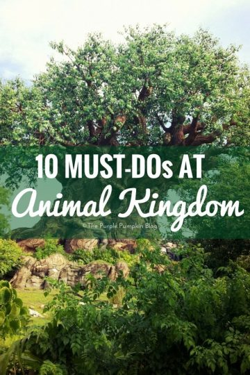 10 Must-Dos at Animal Kingdom