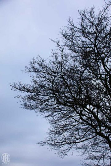 Project 365 - 2017 - Day 1: Silhouette of tree branches against a New Years Day sky