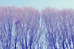 Project 356 - 2017 - Day 25: Bare trees all in a row