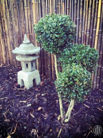 Project 365 - 2017 - Day 5: Stone lantern garden ornament, and small shrubs