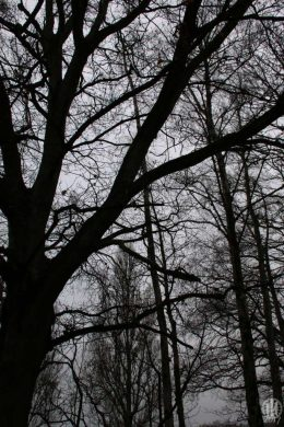 Project 365 - 2017 - Day 9: Silhouette of trees in the forest on a grey day
