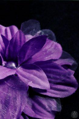 Project 365 - 2017 - Day 134 - Purple Flower
