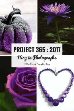 Project 365 : 2017 - May in Photographs