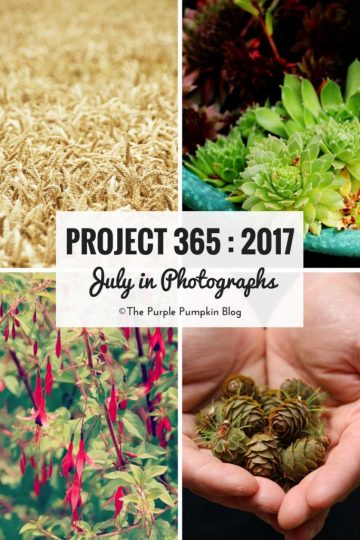 Project 365 : 2017 - July in Photographs