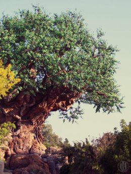 Project 365 - 2017 - Day 265 - Tree of Life