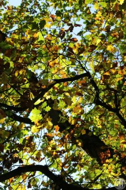Project 365 - 2017 - Day 305 - autumn leaves on a tree