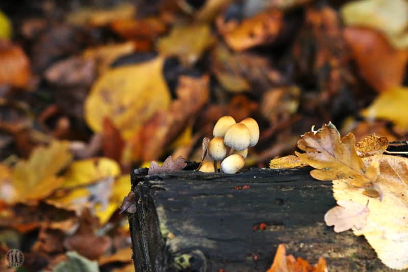 Project 365 - 2017 - Day 324 - wild mushrooms