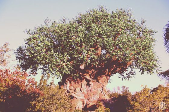 Project 365 - 2017 - Day 344 - Tree of Life