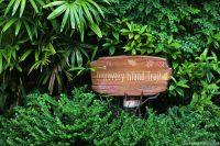 Animal Kingdom - Discovery Island