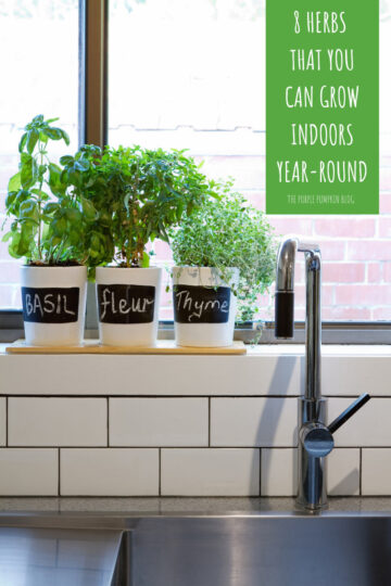 8 Herbs that You Can Grow Indoors Year-Round