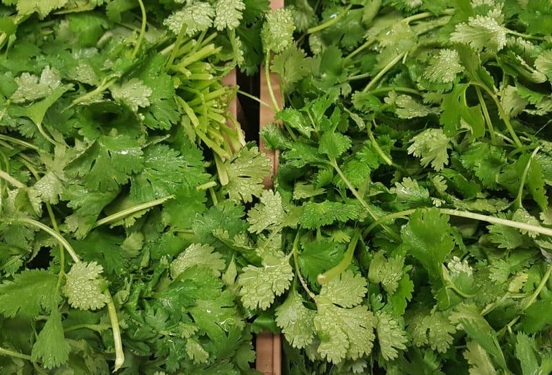 Fresh Herbs - Coriander - Cilantro