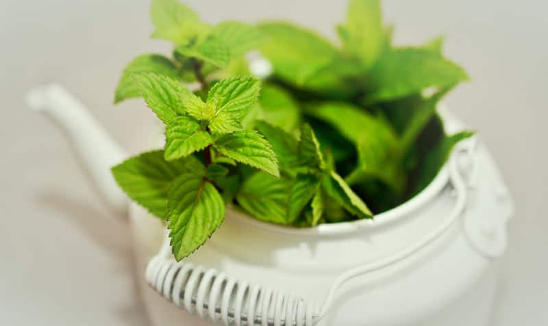 Fresh Herbs - Mint