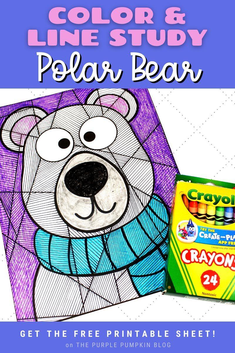 Color & Line Study Polar Bear