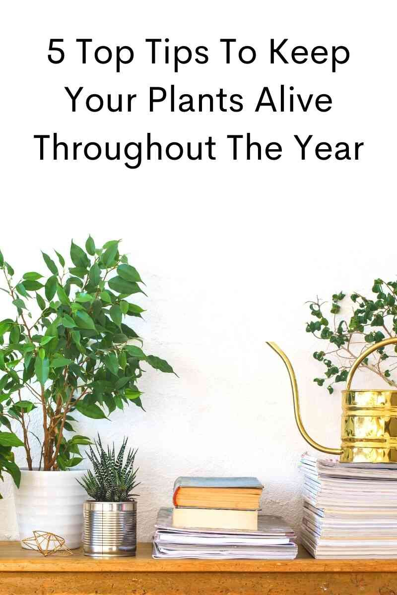 5 Top Tips To Keep Your Plants Alive Throughout The Year